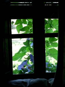 Morning-Glory Window